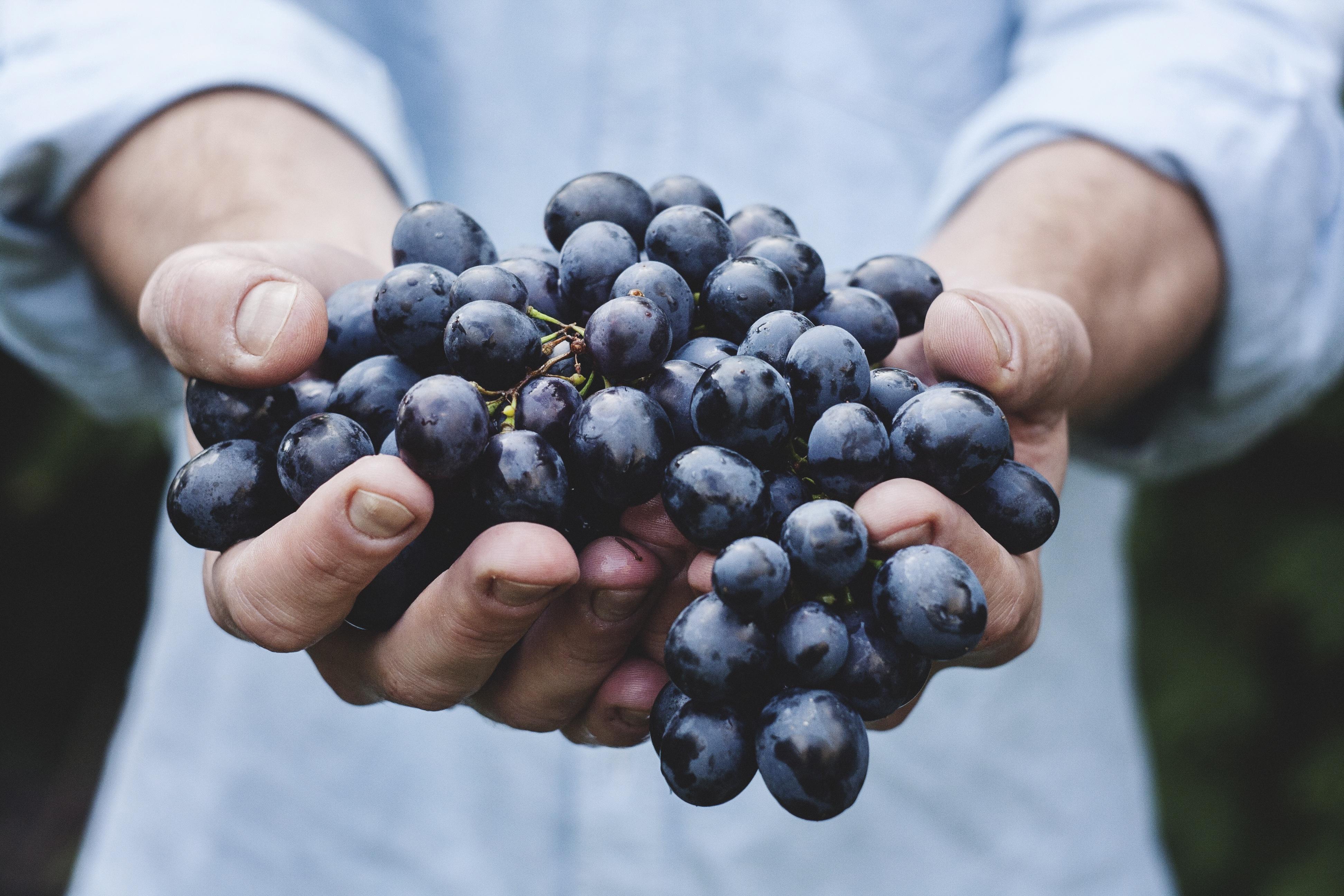 Grapery Grapes