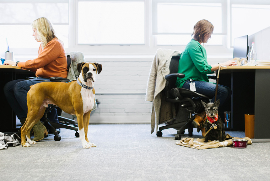 Two women working at their desks, while their dogs look at the camera.